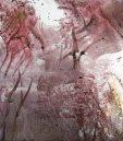 wild trees iii ( pp)$25