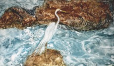 Egret at Ortona Locks (WC) (Juried into 2011 CVWG Show) $225