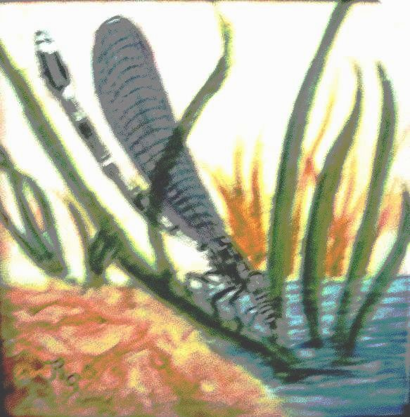 Dragonfly on Water (WC) $50